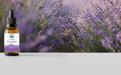 Lavender Essential Oil Benefits to Purify Your Body and Mind