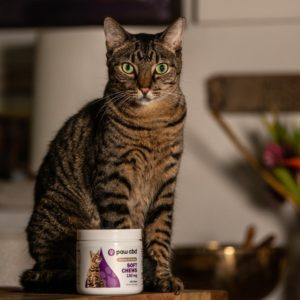 CBD soft chew feline